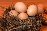 ありえへん∞世界 卵の大きさのS・M・Lのサイズの差は?